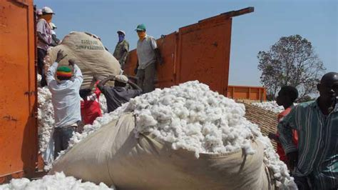 Le Sénégal Développe Sa Culture Du Coton
