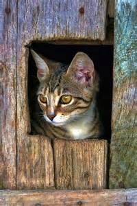 barn cat barn cat feline fancy