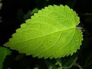 Pflanzen Bestimmen Nach Bildern : naturegate pflanzen ~ Eleganceandgraceweddings.com Haus und Dekorationen