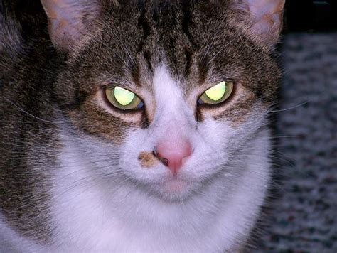 evil cat cats kill eyes ever most scary glowing kitties why wants might trying dark lolwot they think ghost found