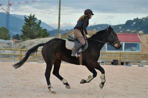 monter comme un cheval terre de cheval etudiante propose aide pour monter