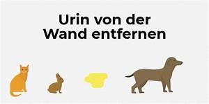 Klebeband Von Wand Entfernen : urin von der wand entfernen flecken und geruch beseitigen ~ Frokenaadalensverden.com Haus und Dekorationen