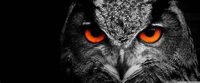 Owl Eye Ultrawide Desktop 3440 1440 Wallpapers
