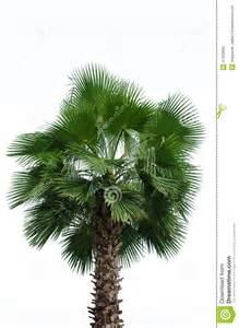 Tropical Palm Tree Names
