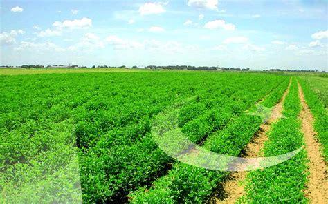 Green Fields Like Pak Flag Wallpapers - My Site