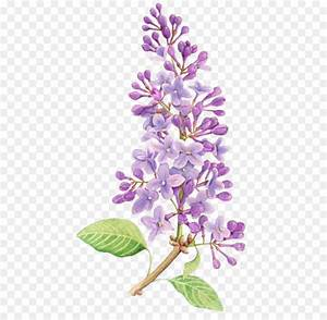 Purple Flower Png - Flowers Ideas For Review