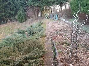 Rasenpflege Nach Dem Winter : garten experte wels ihr partner f r einen sch nen garten ~ Orissabook.com Haus und Dekorationen