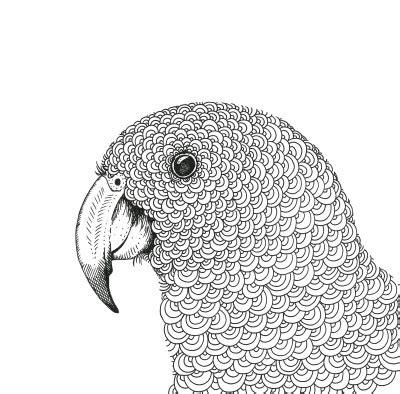 nz native birds colouring book