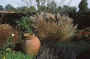 Gräser Für Gartengestaltung : herrliche halme attraktive gr ser sind rund ums jahr eine augenweide das gr ne medienhaus ~ Sanjose-hotels-ca.com Haus und Dekorationen