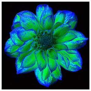 1000 images about neon flowers on Pinterest