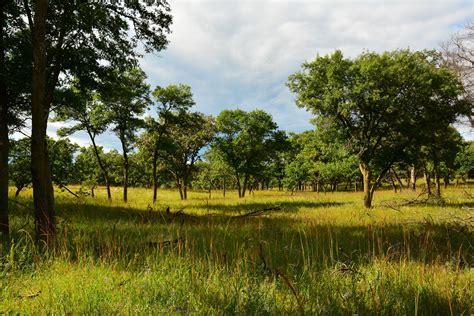savanna oak cedar creek ecosystem science reserve