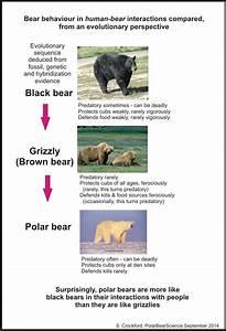 Polar Bear Attacks On Humans  U2013 An Evolutionary Perspective