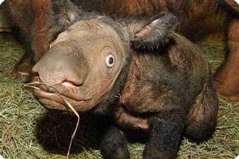 WEIRD NEWS: Weird and Ugly animals on Planet
