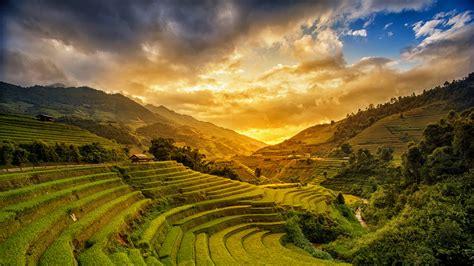 hong kong yellow rice terraces  vietnam av travel
