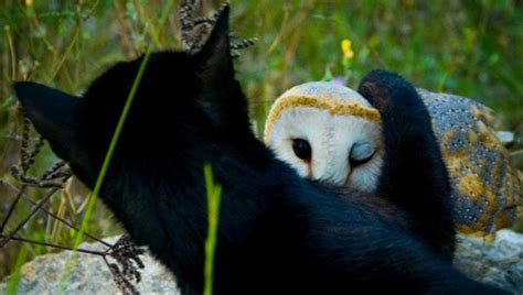 weirdest animal friendships coolweirdo