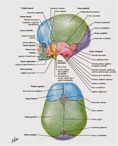 Pin De Corey Problemas En Anatom U00eda