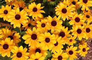 Gelbe Sommerblumen Mehrjährig : gelbe sommerblumen stockbild bild von g nsebl mchen 58174229 ~ Frokenaadalensverden.com Haus und Dekorationen
