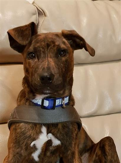Breed Mixed Puppy Matilda Dogs Needs