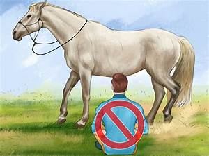 How to Groom a Horse: 13 Steps (with Pictures) wikiHow