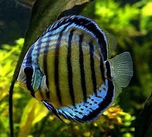 Best 25+ Fish wholesalers ideas on Pinterest   Seashell ...