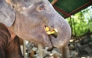 Facts About Asian Elephants You Won't Believe You Didn't Know