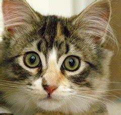 Katze Erbricht Oft : katzen informationen hilfe meine katze erbricht sich st ndig ~ Frokenaadalensverden.com Haus und Dekorationen