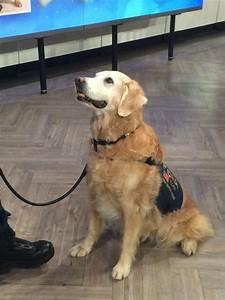 Good Karma  Photo  Vote For The Last 9  11 Rescue Work Dog Still Alive