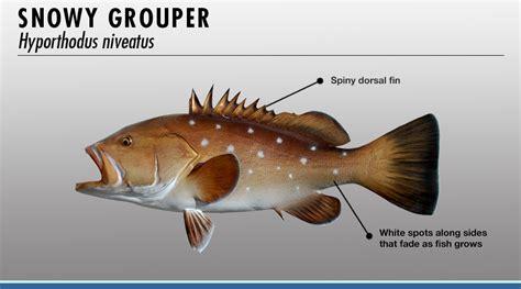 grouper fishtrack identifier features