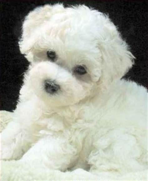 Teddy Hunde Kaufen