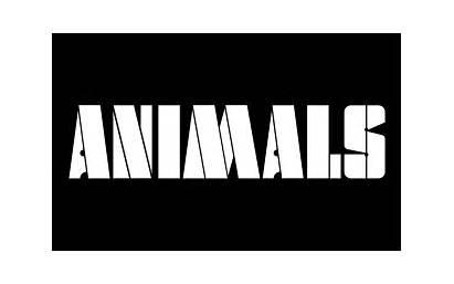 Floyd Pink Animals Visual Identity Iconic Records