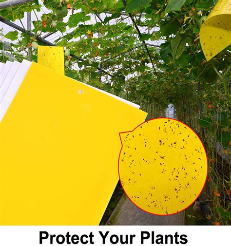 outdoor yellow insect sticky card hanging fly catcher glue