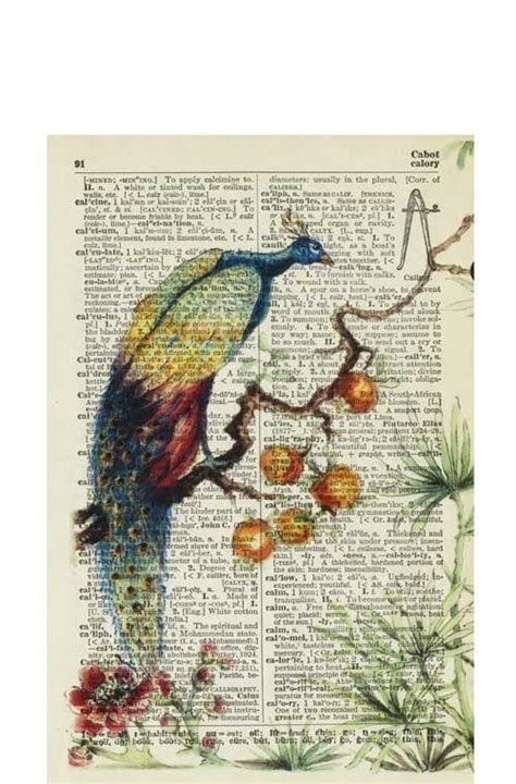 ancient peacock reproduction printed on 75 year old page from