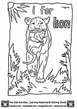 Wombat Coloring Stew Template Pages Colouring sketch template
