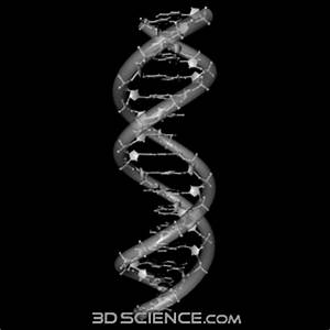 Dna Structure 3d Model | www.pixshark.com - Images ...