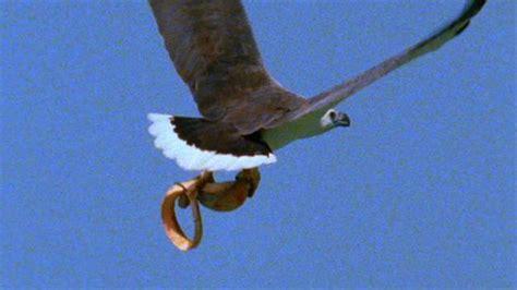 worlds deadliest eagle  toxic snake
