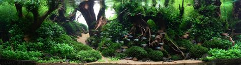 Aquascape Forest by The Top 10 Most Beautiful Freshwater Aquascapes Of 2012