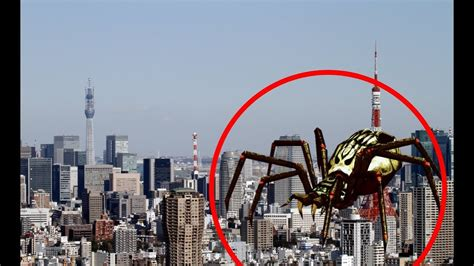 giant spider caught  camera spotted  real life