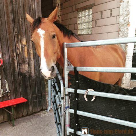 pferd monatliche kosten