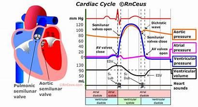 Cardiac Cycle Diastole Heart Blood Through Order