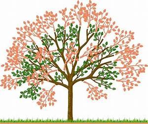 Kirschbaum Richtig Schneiden : kirschb ume im sommer schneiden kirschbaum g rten und ~ Lizthompson.info Haus und Dekorationen