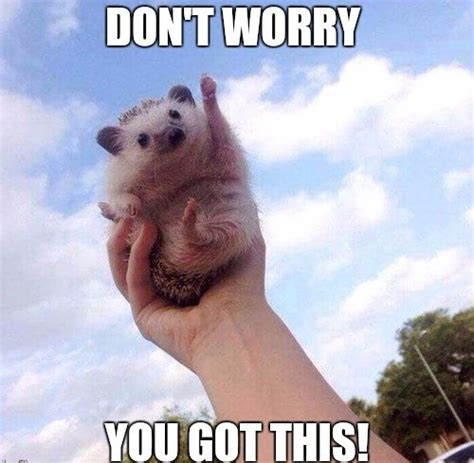 20 Encouragement Memes That Will Surely Lift Your Spirits ...