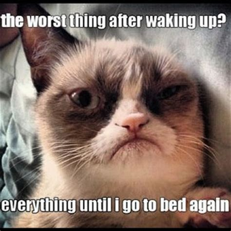 The Worst Thing After Waking Up Cat Meme - Cat Planet ...