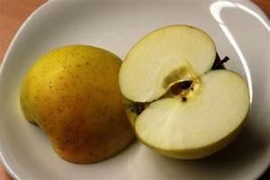 Wann äpfel Ernten : apfelernte ~ Lizthompson.info Haus und Dekorationen