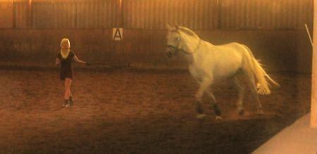 erstbehandlung pferdeosteopathie  shhh und mv