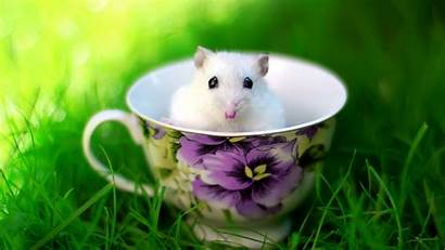 Mouse Rat Funny Cup Animals Wallpapers Animal