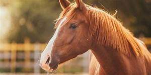 Bilder Von Pferden : traumdeutung pferd was bedeutet das symbol ~ Frokenaadalensverden.com Haus und Dekorationen