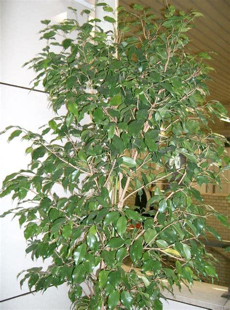 plante pour chambre à coucher les plantes dépolluantes purifiez l 39 air de votre appartement