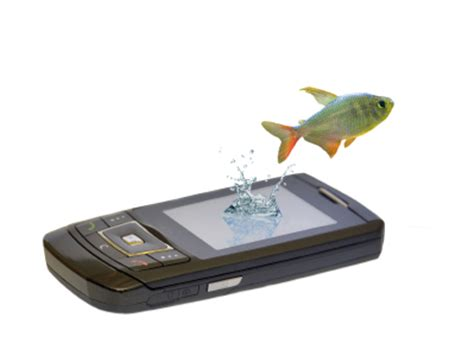dropped phone in water what should i do if i dropped my phone in water