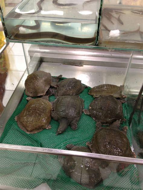 Terrarium Design: how much are turtles at petco 2017 ...