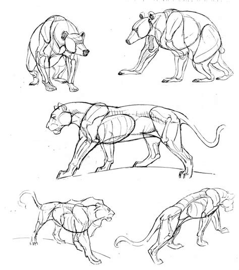 bear panther anatomy reference creature  animal